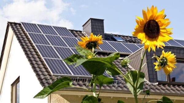 Instalacja fotowoltaiczna ,dach z panelami, kwiaty słonecznika.